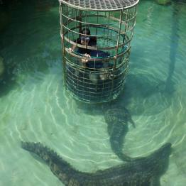 Crocodile Cage Diving, South Africa 2013